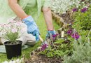 How to Design a Kidney Shaped Annual Flower Bed
