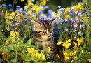 How to Stop Animals From Digging Mulch & Flowers