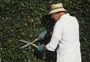 Can I Use WD-40 on Hedge Cutters?