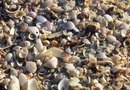 How to Use Crushed Shells as Mulch