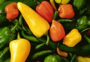 Hot Peppers for Organic Bug & Spider Repellent