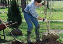 Do You Leave on the Wire Mesh When You Plant a Tree?