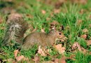 How to keep squirrels out of my flower boxes home guides - How to keep squirrels from digging in garden ...