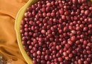 What Are the Benefits of Cranberry Seed Oil?