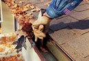 The Best Gutter Guards for Pine Needles