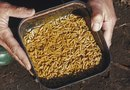 How To Eliminate Maggots in Compost Bins