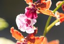 The Best Ways to Fertilize Orchids