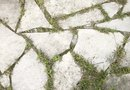 How to Kill Weeds in a Driveway With Salt Brine and Vinegar