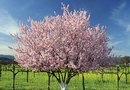 The Best Fungicide for Fruit Trees