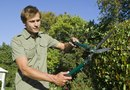 How to Prune Shrubs With a Rusty Trimmer