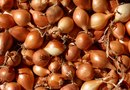 How to Plant Onions in Bales