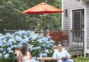 How to Dig Up a Hydrangea Bush