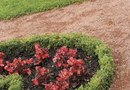 The Varieties of Boxwood That Can Be Used for Knot Gardens