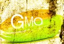 The Disadvantages of GMO Sweet Corn