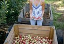 How to Grow Pink Lady Apples