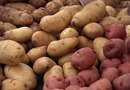 Problems Growing Russet Potatoes