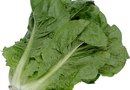 Soil Needs of Romaine Lettuce