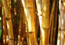 How to Transplant Bamboo From the Ground to Pots