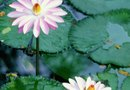 How to Oxygenate Pond Plants