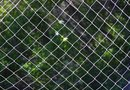How to Grow Shrubs Against a Chain Link Fence