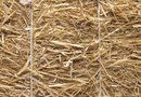 How to Use Hay to Control Weeds in a Vegetable Garden