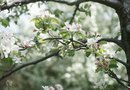 Fruit Trees That Tolerate Moist Soil
