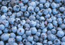 Kinds of Blueberry Bushes