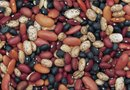 How to Care for a Pinto Bean Plant
