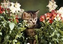 Is Chamaedorea Cataractarum Toxic to Cats?