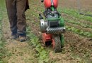 How to Remove Grass After Tilling a Garden