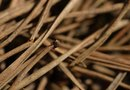 How to Collect Pine Straw Mulch