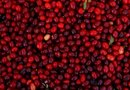 How to Cold Treat Cranberry Seeds