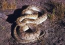 Do Mothballs Work As a Snake Repellent?