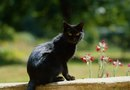 How Do I Keep Cats Out of a Flower Garden?