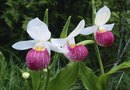 How to Landscape with Orchids
