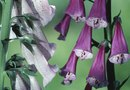 How to Grow Foxglove Inside