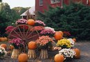 How to Plant Mums in Real Pumpkins