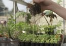 How to Grow in a Greenhouse at a High Altitude