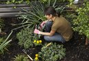 Can You Plant Flowers That Are Not in Your Hardiness Zone?