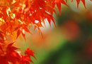 What Trees Are Known for Their Beautiful Autumn Colors?