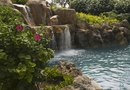 Landscaping Ideas for Cement Ponds & Pools