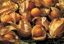 How to Plant & Grow Ground Cherries