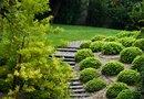 Shrubs for Backyards