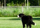 How to Make Dog Repellent for Your Yard