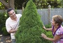 Landscaping Ideas With Shrubs