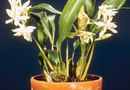 How to Disinfect Before Repotting Orchids