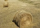 Types of Grass Used for Hay