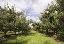 Fertilizing Season for Fruit Trees