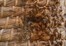 What Are the Dangers of a Back Yard Bee Hive?
