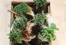 DIY Herb Living Wall